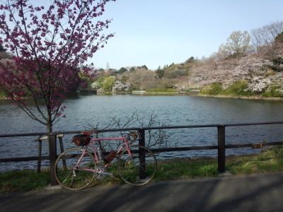 桜デローサ