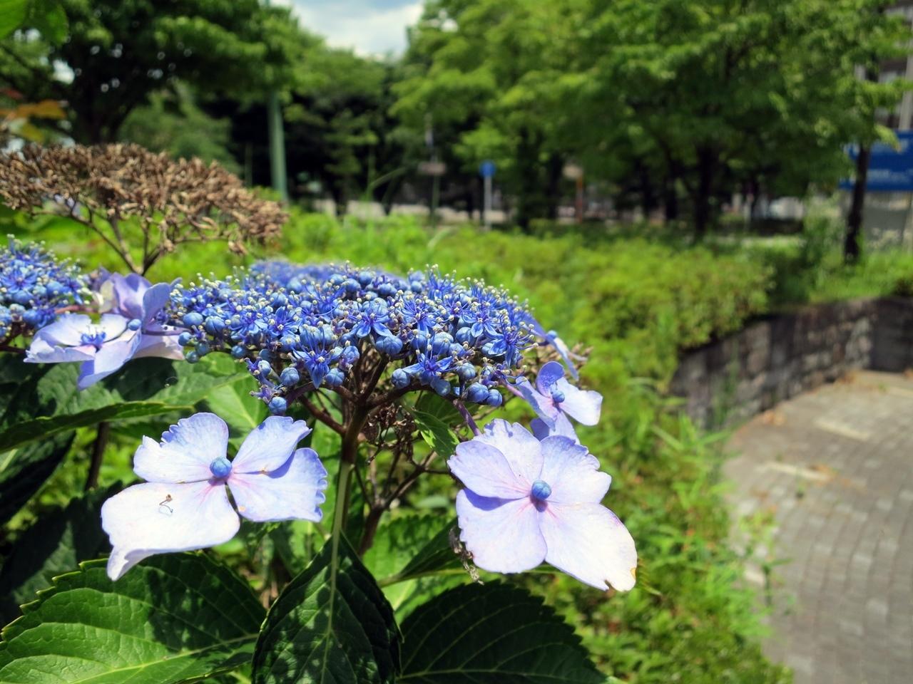 1706初旬鶴見川-04