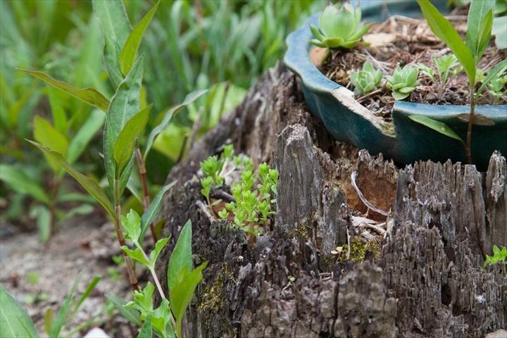 2017-05-03 鉢植え