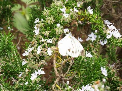 庭木花草の観察