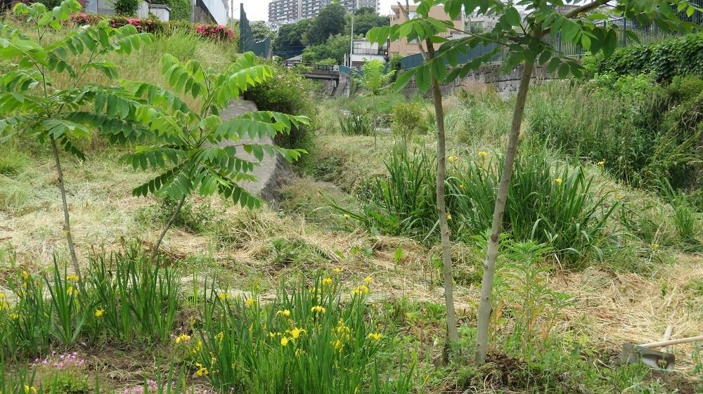 1草刈りIMG_1634