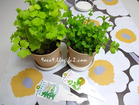 2017 6-18 ぬくもりを緑から得る 植物に話しかける私 ちょっときもい 1