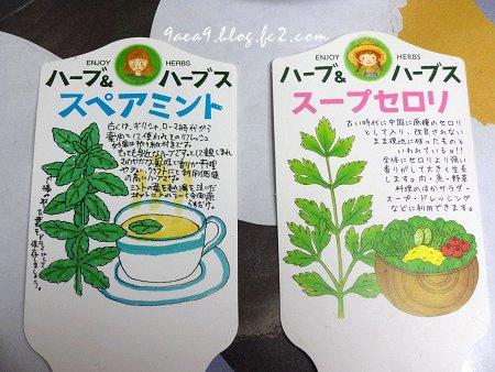 2017 6-18 ぬくもりを緑から得る 植物に話しかける私 ちょっときもい 2
