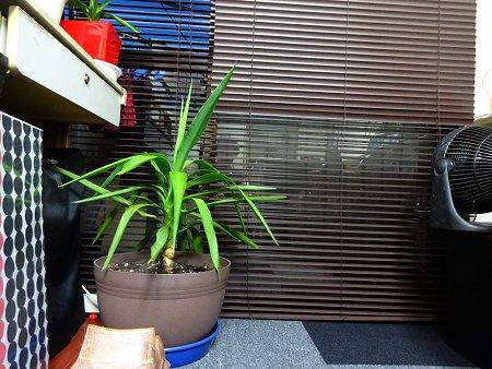 2017 6-18 ぬくもりを緑から得る 植物に話しかける私 ちょっときもい 3