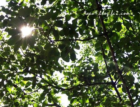 2017 6-18 ぬくもりを緑から得る 植物に話しかける私 ちょっときもい 5