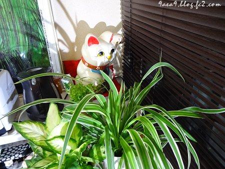 2017 6-18 招き猫の向き