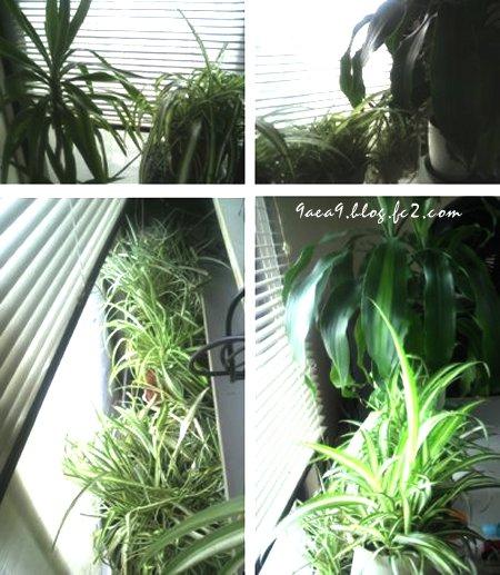2017 6-24 観葉植物 4