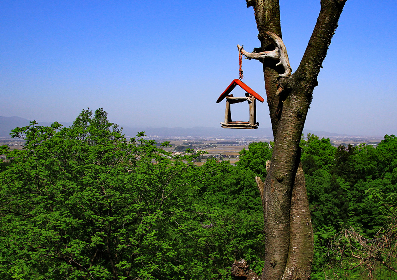 小鳥の巣箱