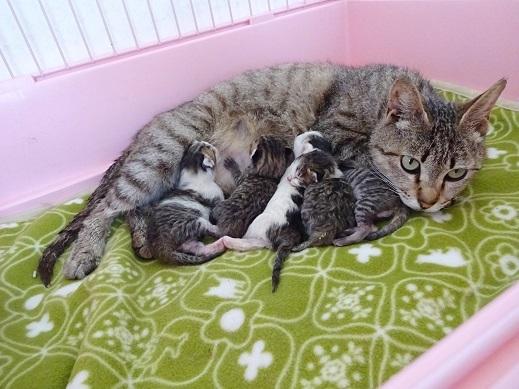 赤ちゃん・母猫