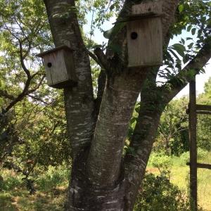 里道の桜の木に巣箱が