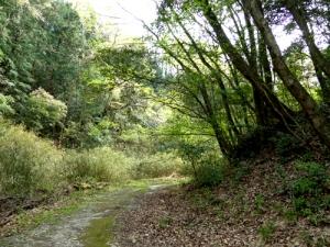 赤池への道