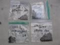 H29.5.4各種ローゼル種袋@IMG_1122