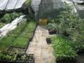 H29.5.21野菜苗仮置き場の様子@IMG_1246