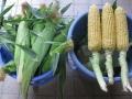 H29.6.22夏野菜収穫@IMG_0023