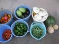 H29.7.7夏野菜収穫@IMG_0143