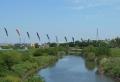 新河岸川に架かる鯉のぼり①