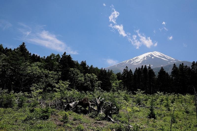 406A2505富士山s