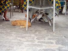 ハバナ街中の猫