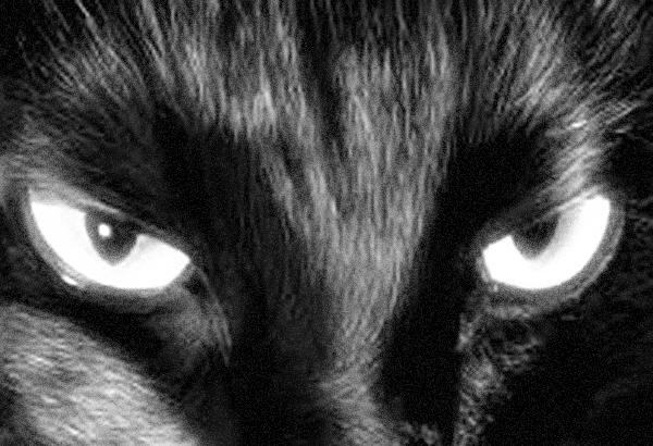 黒猫-1-1