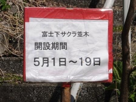 1富士下桜1
