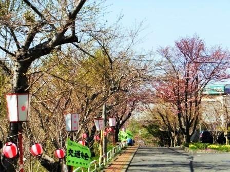 4富士下桜4