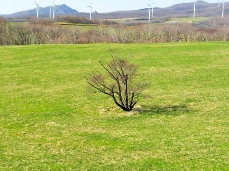 7崎守の桜1