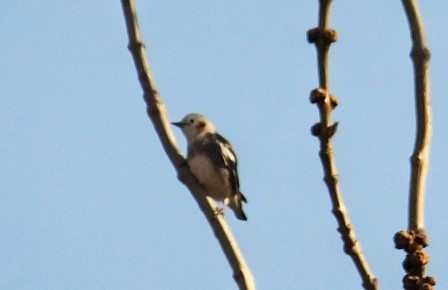 11幌萌の鳥