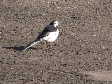 14南部陣屋の鳥