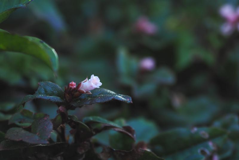 iwanashi005.jpg