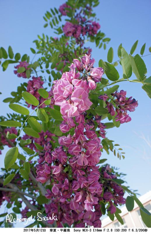 DSC01638 花