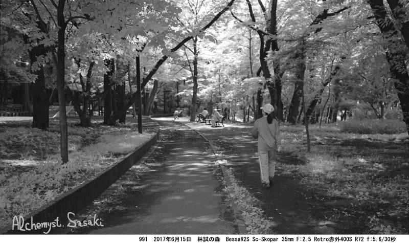 林試の森991-33