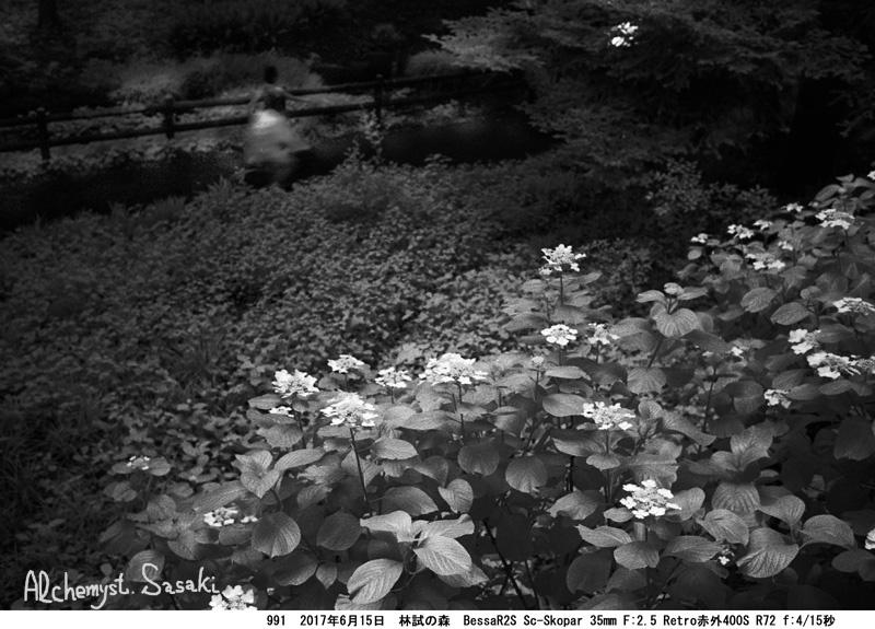 林試の森991-35 Ⅱ