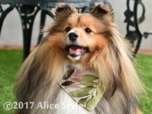 Alice Style 2017 クールバンダナ新作blogm3