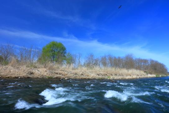 千曲川の清流と獲物をもらう鷹