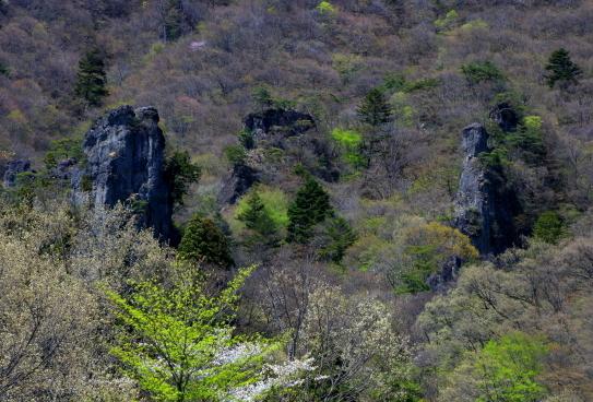 岩と化した御仏を取り巻く木々