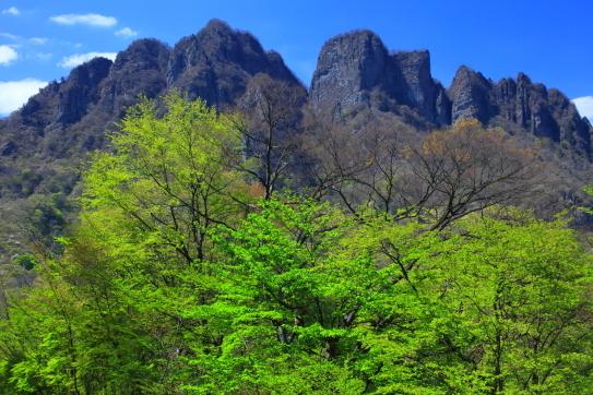 淡い若葉と障立する妙技山