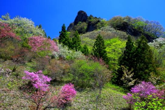 岩峰を彩るそれぞれの木花と若葉