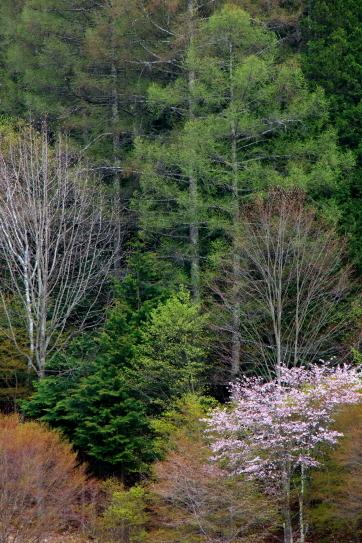 木それぞれの春