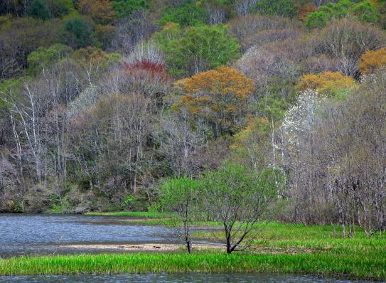 鏡池と芽吹き始めた森に風渡る