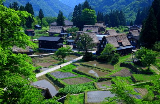 新緑映える世界遺産の五箇山相倉集落