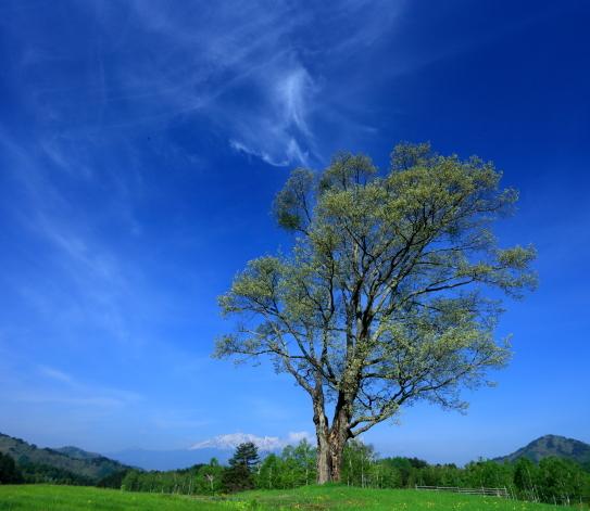 初夏の霊峰御岳山麓