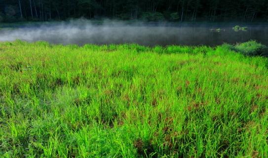 朝もやの草原