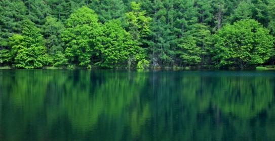 緑色滴る御鹿射池
