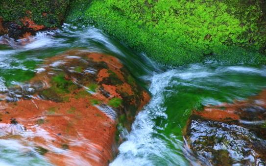 水草と緑苔映える清流