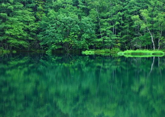 御射鹿池の湖面に映える翠の林