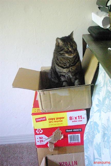 ボクの箱!1