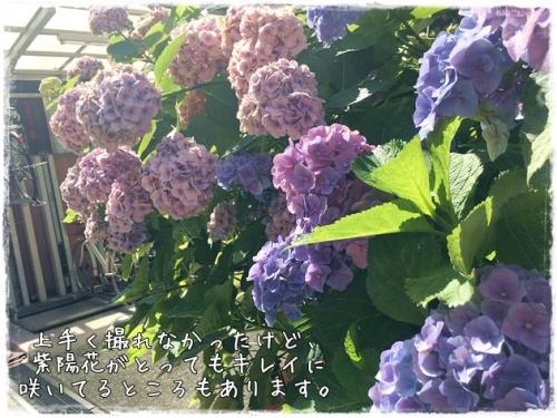 IMG_7142 0614