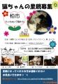 千葉県白井市周辺の猫里親募集