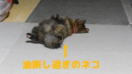image365_New.jpg