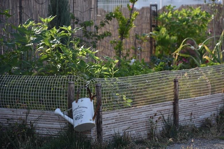 228 菜園